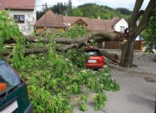 Kwikfynd Tree Cutting Services alawoona